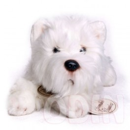 West Highland Terrier mediano