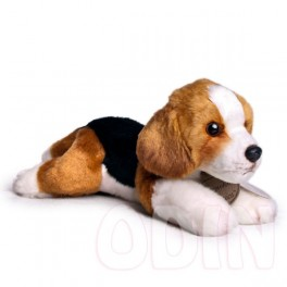 Beagle mediano